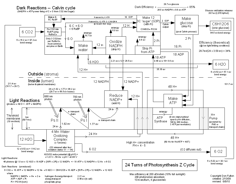 Twinkle toes engineering photosynthesis z cycle diagram with energy flows 24 turns of photosynthesis z cycle ccuart Gallery